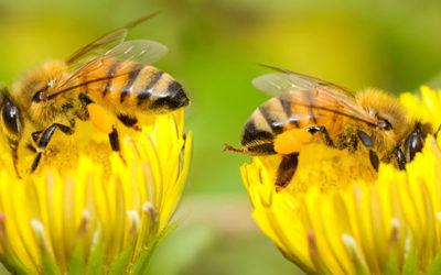 Bienenprojekte von Lega S